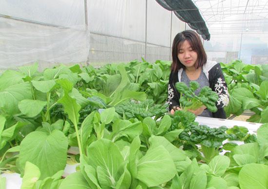 Chị Sang thu hoạch rau thủy canh. Ảnh: VĂN PHIN