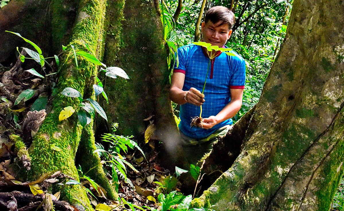 """Niềm vui của một thanh niên Xê Đăng khi tìm thấy cây sâm tự nhiên trong rừng già Ngọc Linh. Trước đây, đồng bào đã phát hiện ra loại dược liệu này và gọi là cây """"thuốc giấu"""". Trong kháng chiến chống Mỹ, đồng bào đã chỉ cho Ban Dân y Khu 5 nơi phát hiện cây thuốc quý này và từ đó gọi là Sâm Khu 5."""