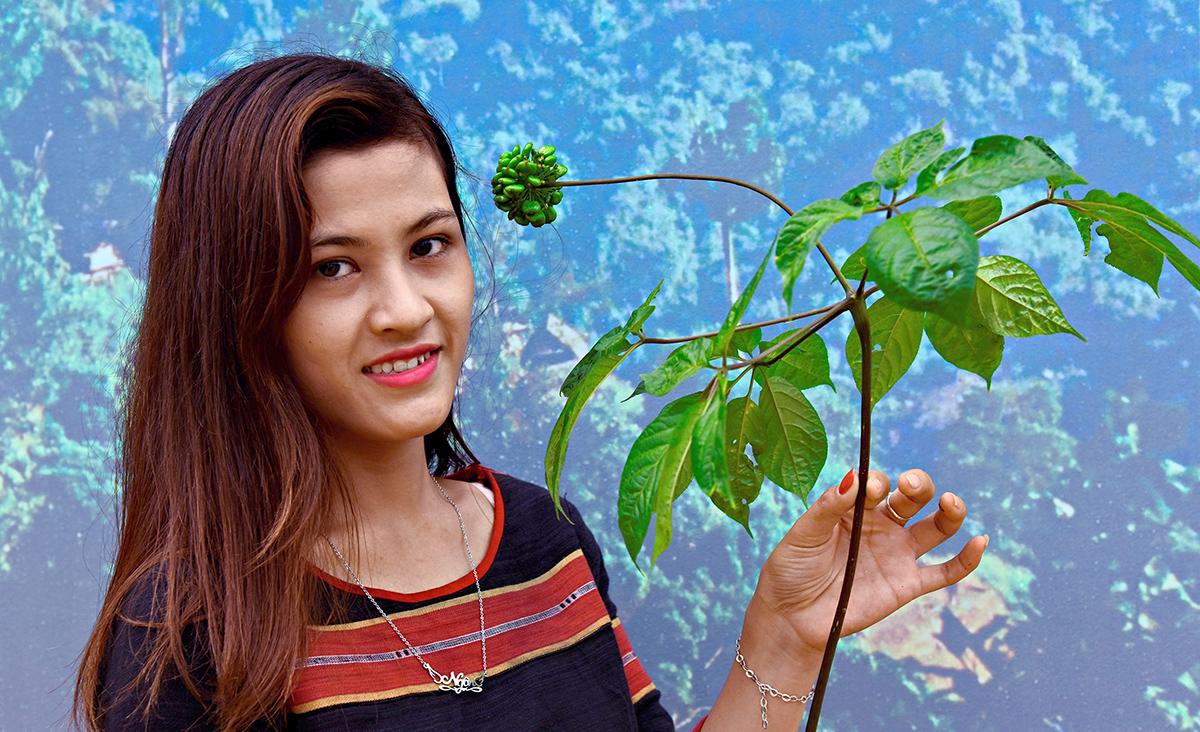 Một cô gái Xê Đăng nâng niu một cây sâm vừa kết trái còn non xanh.