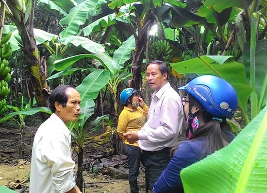 Nông dân xã Tam Ngọc phát triển kinh tế vườn. Ảnh: T.Q