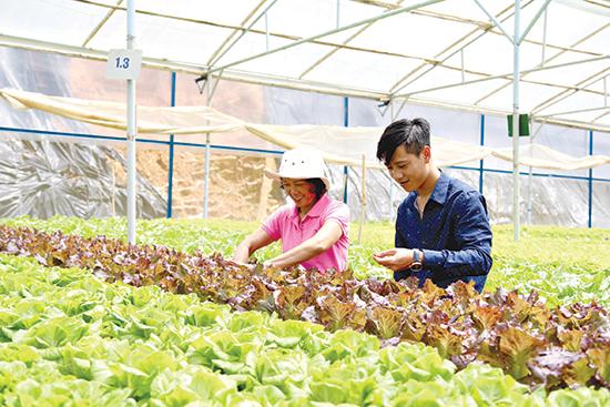 Nông nghiệp công nghệ cao đang là xu hướng. Ảnh: QUỐC TUẤN