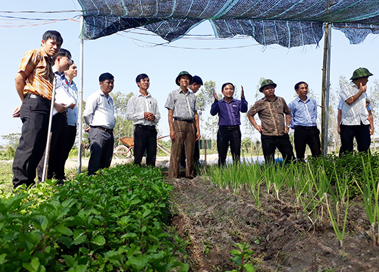 Mô hình trồng rau tại HTX nông nghiệp Trường Xuân Xanh đang thực hiện sử dụng phân bón hữu cơ. Ảnh: X.T