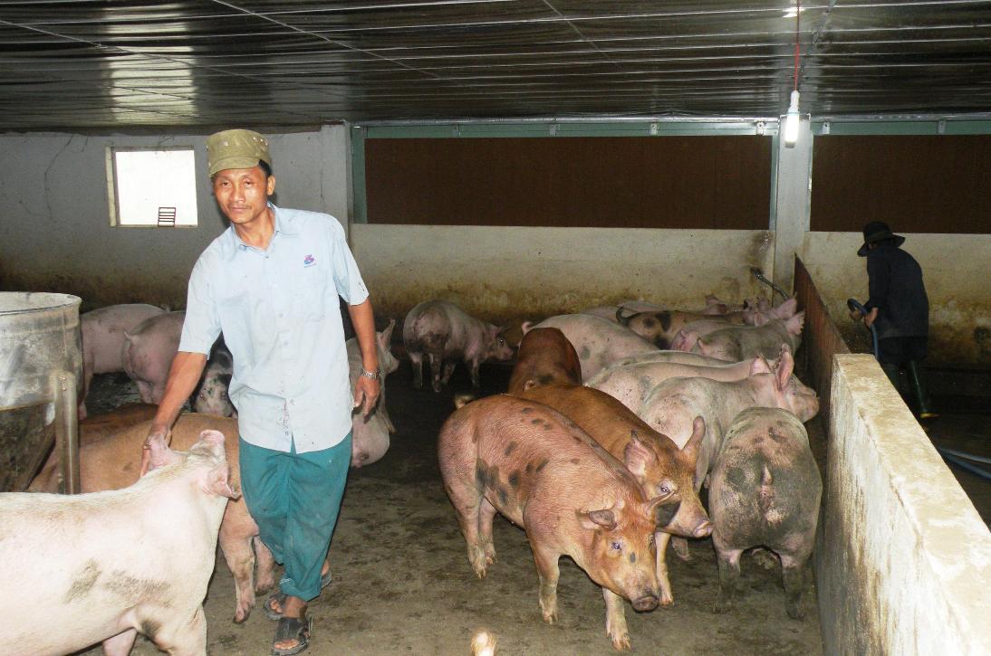 Ngành liên quan và chính quyền các địa phương cần tăng cường giám sát dịch bệnh tại các cơ sở chăn nuôi.Ảnh: VĂN SỰ