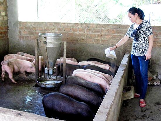 Chăn nuôi heo nhỏ lẻ trong nông hộ với mật độ cao và không đảm bảo vệ sinh môi trường sẽ tiềm ẩn nguy cơ bệnh DTHCP tấn công. Ảnh: VĂN SỰ
