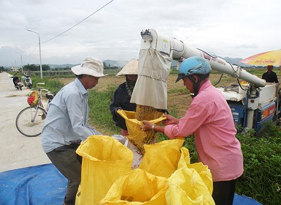 Thời gian tới, Duy Xuyên sẽ nỗ lực đẩy mạnh tái cơ cấu ngành nông nghiệp gắn với xây dựng huyện NTM. Ảnh: VĂN SỰ