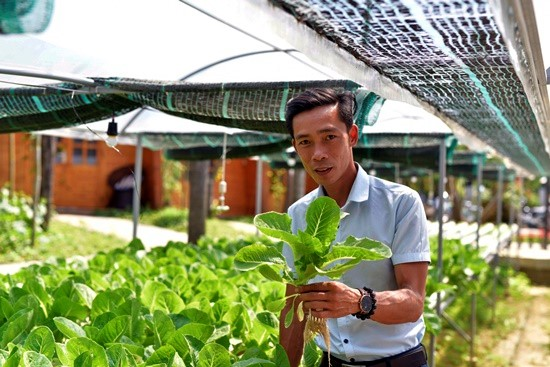 Nhat Linh and his hydroponic vegetable garden.