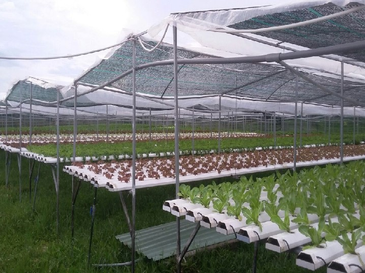 Model of hydroponic vegetable planting by Huynh Nghiep