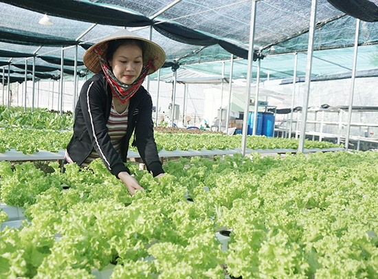 The young's model of clean agriculture.
