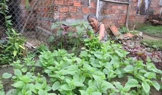 Vườn rau sạch tại nhà bà Nguyễn Thị Thu (tổ 6, thôn Đức Phú, xã Tam Thạnh). Ảnh: THANH THẮNG